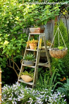 Nice repurpose of an old wooden ladder in the garden