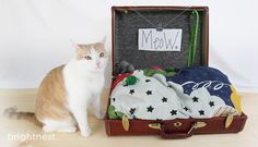 No-Sew Pet Bed from an Upcycled Suitcase!