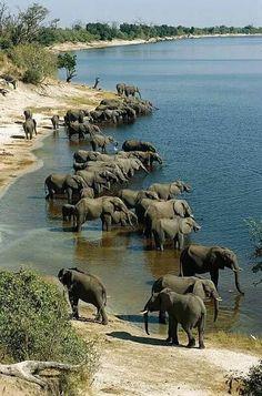 Elephant Park, Happy Elephant, Wild Elephant, Elephant Love, Nature Animals, Animals And Pets, Baby Animals, Cute Animals, Baby Elephants