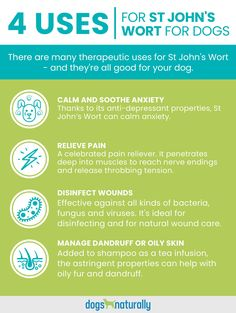 #1 Calm And Soothe Anxiety #2 Relieve Pain #3 Disinfect Wounds #4 Manage Dandruff Or Oily Skin  Read more about St Johns Wort Here 🌾