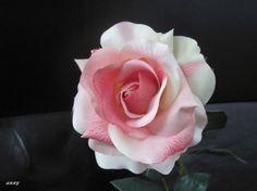 A Rose for you - Flowers Wallpaper ID 1238195 - Desktop Nexus Nature