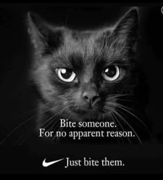 Bite now growl later blackberry - your daily dose of funny cats - cute kittens - pet memes - pets in clothes - kitty breeds - sweet animal pictures - perfect photos for cat moms Funny Animal Memes, Funny Animal Pictures, Funny Animals, Cute Animals, Funny Memes, Pet Memes, Memes Humor, Animal Quotes, Funny Cartoons