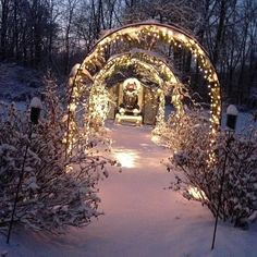 More of our winter garden shots