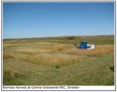 As in Spain, in US some researchers have discovered that Tall wheatgrasses perform better than C4 crops like Switchgrass under semiarid and arid conditions.