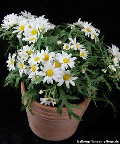 Die 8 Besten Bilder Von Pflanzenpflege Nursing Care Garden Plants