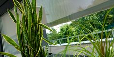 Stínící technika Anse pro soukromé i veřejné objekty - FWDS Europe, a. Pergola, Europe, Plants, Instagram, Outdoor Pergola, Plant, Planets