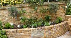 To disguise the awkward angles to the boundaries of the plot, we designed curving raised beds built in the same soft, multi-toned brick as t...