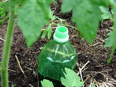 Homemade Drip Irrigation - using plastic bottles