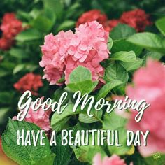 Our proud new collection of Good Morning Images is here to add that refreshing touch to the starting of our day. Share & spread this morning joy! Cute Good Morning Quotes, Good Morning Picture, Good Morning Flowers, Good Morning Good Night, Morning Pictures, Good Morning Wishes, Morning Pics, Happy Morning, Morning Coffee