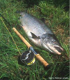 Salmon reel Fly Gear, Fly Fishing Gear, Fly Fishing Rods, Gone Fishing, Fishing Boats, Fishing Stuff, Fishing Places, Atlantic Salmon, Salmon Fishing