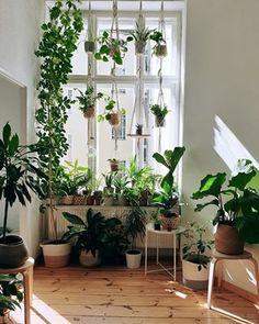 Bedroom Plants Decor, House Plants Decor, Plant Decor, Plant Rooms, Plant Aesthetic, Aesthetic Rooms, Indoor Garden, Indoor Plants, Indoor Plant Wall