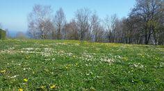Dia 18 - Primavera