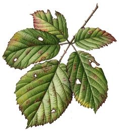 Immagine di http://lizzieharper.co.uk/Blog%20images/leaf%20julia%20trickey.jpg.