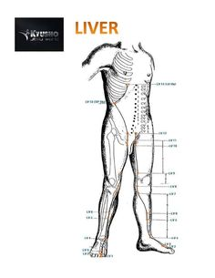 Discover 5 Deadly Pressure Points on the Human Body that you likely did not realize were so very dangerous! The science of pressure point self defense. Self Defense Tips, Self Defense Techniques, Thoracic Vertebrae, Survival Life Hacks, Black Panther Party, Chakra Meditation, Disaster Preparedness, Pressure Points, Le Point