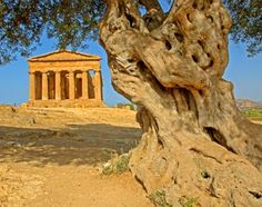 Agrigento - Valle dei Templi - Temple of Concord Places Around The World, The Places Youll Go, Great Places, Places To See, Beautiful Places, Around The Worlds, Places In Italy, Southern Italy, Where To Go