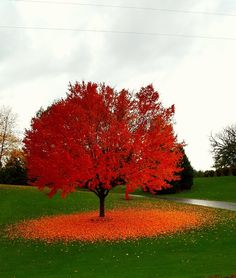 Fall in Wisconsin : pics
