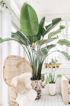 68 trendy living room green plants dreams Indoor plants and tropicals Estilo Tropical, Sala Tropical, Modern Tropical, Tropical Decor, Tropical Paradise, Tropical Style, Paradise Plant, Tropical Interior, Tropical Plants