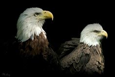 Two eagles by Mickey  on 500px