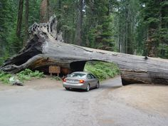 Tunnel Log is a tunnel cut through a fallen giant sequoia tree in Sequoia National Park, California, USA.