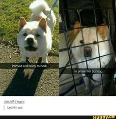Laugh your ass off! - Funny Memes, Whats Hot, Trendy, New. Watch Fails and Epic moments or browse through Funny Memes to Game of Thrones Quotes. Funny Animal Pictures, Cute Funny Animals, Funny Cute, Funny Dogs, Hilarious, Funniest Pictures, Funny Laugh, Super Funny, Dog Pictures