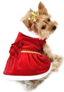 Christmas dog outfit- Dog Christmas Dress Miss Santa