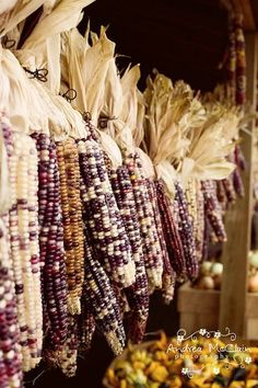 Gleaming rows of Indian Corn....