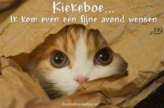 Facebook-plaatjes van fijne avond, gezellige avond met grappige dierenplaatjes van Animatieplaatjes.nl 4