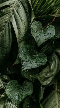 Download free image of Wet monstera plant leaves mobile wallpaper 2264193