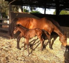 Helsinge (AUS) & her 2013 filly by Casino Prince, a full sister to All Too Hard (AUS)