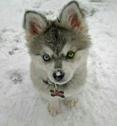 The eyes have it!