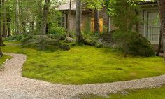 Where a lawn won't grow, plant moss — no mowing, no fussing, no problem.
