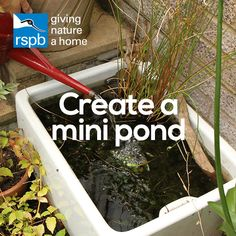 Water brings a magical quality to your garden Create a mini pond