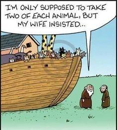 Crazy cat lady's ark!