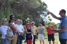 Journée Dcouverte au Domaine la Cabotte - Eric Plumet explique la croissance de la vigne et les méthode pour la « conduire » #GourmetOdyssey
