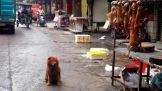 Petition · Donald Trump: STOP SLAUGHTERING DOGS in short STOP YULIN DOG MEAT FESTIVAL · Change.org