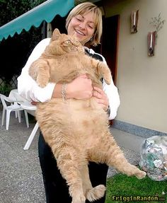 PUT ME DOWN!  Holy fat cat!!