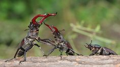 beautiful pictures of stag beetle, 2560x1440 (581 kB)