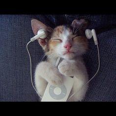 """#CitationDuJour """"Il y a deux moyens d'oublier les tracas de la vie : la musique et les chats. Albert Schweitzer"""