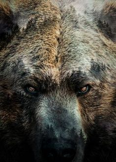 Amazing Beasts, Bear Island, Spiritual Animal, Bear Silhouette, Bear Tattoos, Nature Posters, Bear Pictures, Bear Wallpaper, Bear Art
