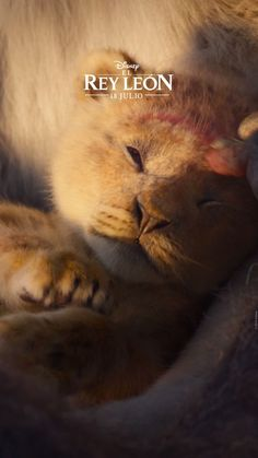 The Lion King - Hakuna Matata! Get ready to discover 'The Lion King' like you never imagined before. July 18 in - Lion King Video, Lion King Movie, The Lion King, Disney Lion King, Cute Funny Animals, Cute Baby Animals, Cute Cats, Lion Wallpaper, Disney Wallpaper