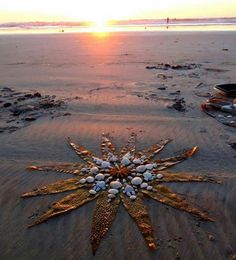 Mermaid Sun FLower.