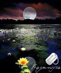 Moon Moon, Moon Art, Full Moon, Big Moon, Moon Shadow, Moon Pictures, Nature Pictures, Beautiful Moon, Beautiful Places