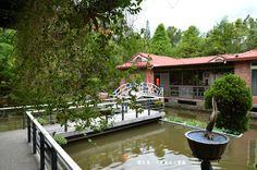低垂的綠葉與池畔的水上風光,以傳統建築為背景,畫面帶有一絲詩意