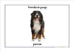 Fichas de infantil: Vocabulario básico con animales de granja Alphabet Wall, Poster Wall, Dogs, Check, Child Psychotherapy, Animals, Play Therapy, Animal Pictures, Preschool Farm