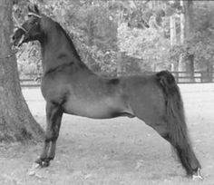 Tedwin Topic - Bred by Ted Young, who was also a professional dog handler..I used to spend time at his farm as a teenager..