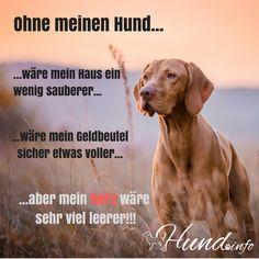 Ein weiterer schöner Hundespruch: Ohne meinen Hunde wäre mein Haus ein wenig sauberer, wäre mein Geldbeutel sicher etwas voller, aber mein Herz wäre sehr viel leerer!!
