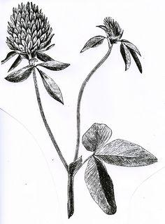 clover tattoo | nature tattoo | tattoo idea | inspirational tattoo | tattoo inspiration | tattoo ideas | tattoo placement | tat | back tattoo | rib tattoo
