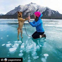 O melhor amigo para todas horas!  #Repost @pagextreme with @repostapp   @sinclair_photo  Use #pagextreme.  Siga @aventureirosbr #dog #viajantesdubbi #essemundoenosso #escolhoviajar #destinosimperdiveis #pagextreme #cachorro #dog . - http://ift.tt/1HQJd81