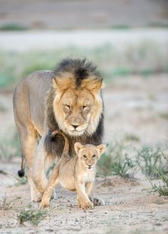 Me and dad - Kgalagadi Transfrontier Park