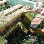 Success Stories – The British Snail Farmer